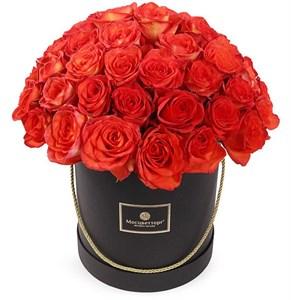 51 роза Хай Мэджик в шляпной коробке