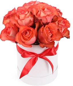 Роза между нами